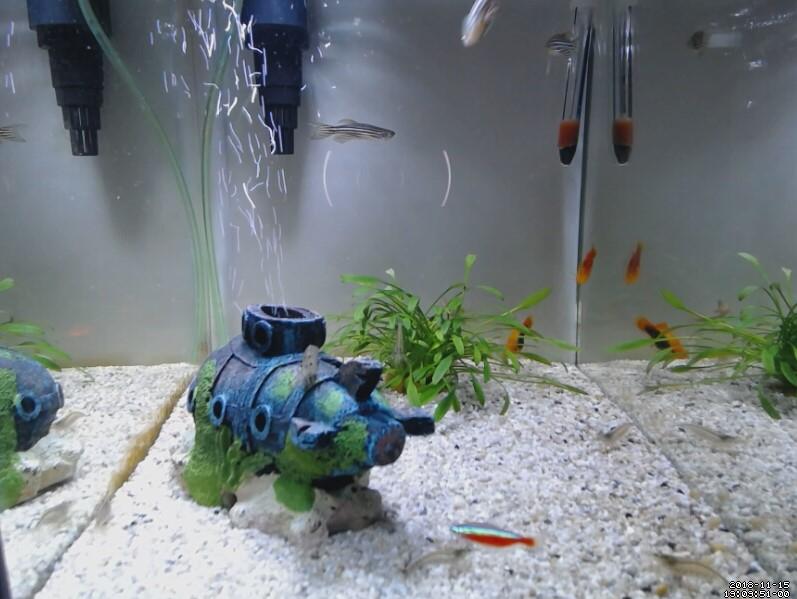 aquariumwerk1