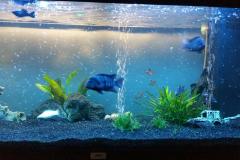Aquarium thuis